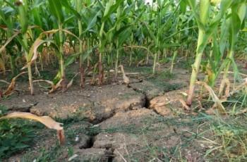 Rekompensaty za straty spowodowane suszą - wnioski do