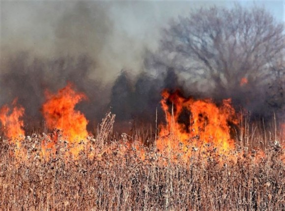 Wypalanie traw grozi utratą dopłat - ARiMR przypomina