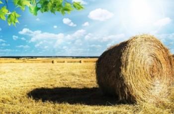 GUS zbadał koniunkturę w polskich gospodarstwach.