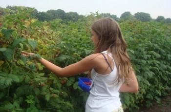 Polscy producenci owoców borykają się z konkurencją ze