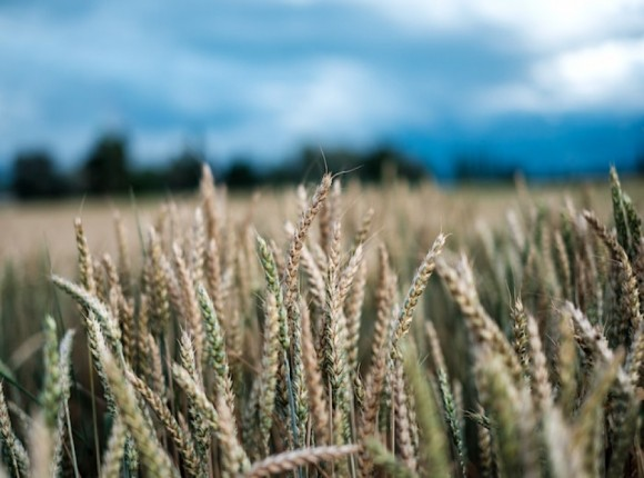 Nowe stawki opłat na Giełdzie Rynku Rolnego