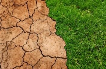 Rolnicy są gotowi wesprzeć wizję Zielonego Ładu, ale