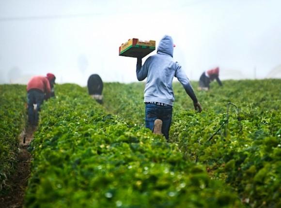 Instrukcja dla producentów rolnych zatrudniających cudzoziemców przy pracach sezonowych
